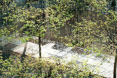 Falling summer rain on trees - p301m799571f by Sven Hagolani