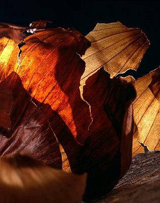 Zwiebelschalen - p9791876 von Zimmermann photography