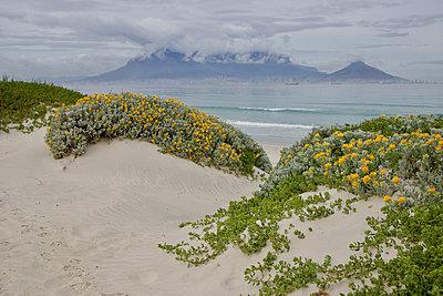 South Africa, Beach - p1640m2242069 by Holly & John