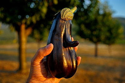 The Funny Aubergine and I - p491m1083388 by Ernesto Timor