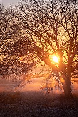 Sunrise in the early morning fog - p739m2071164 by Baertels