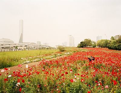 Poppy field - p751m1584803 by Dieter Schwer