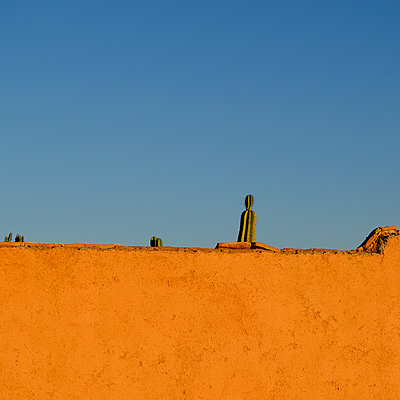 Wall and Cactus - p1105m2043821 by Virginie Plauchut