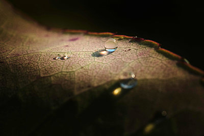 Glimmering Water Droplets on Multicolored Leaf After Rainstorm - p1166m2246739 by Cavan Images