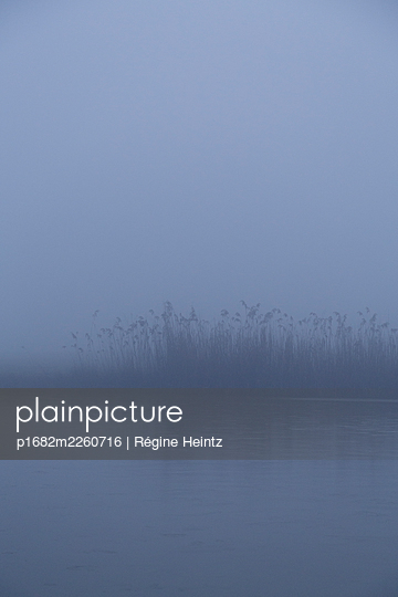Schilf im Nebel - p1682m2260716 von Régine Heintz