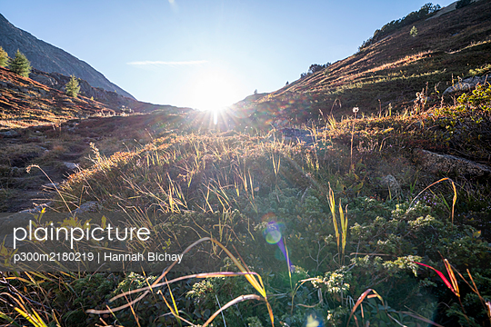Switzerland, Canton of Grisons, Alpine flora at sunset - p300m2180219 by Hannah Bichay