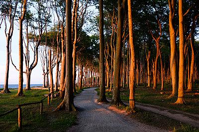 Buchenwald an der Ostsee Küste - p1600m2230771 von Ole Spata