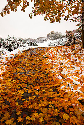 Germany, Bavaria, Path in Olympia Park in winter - p300m929857f by Christina Falkenberg
