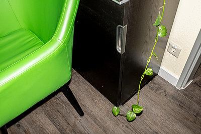 Artificial ivy arum - p1059m2272726 by Philipp Reiss