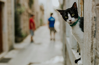 Cat in the Old Town of Trogir - p1085m1496590 by David Carreno Hansen