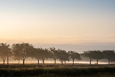 Morning fog - p739m2116441 by Baertels