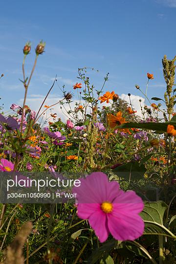 Flowering meadow - p304m1050990 by R. Wolf