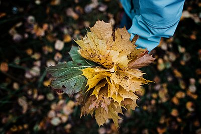 child holding a bunch of colourful autumn leaves in a forest - p1166m2141078 by Cavan Images
