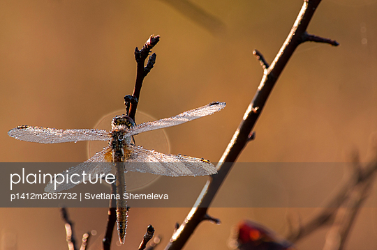Libelle - p1412m2037732 von Svetlana Shemeleva