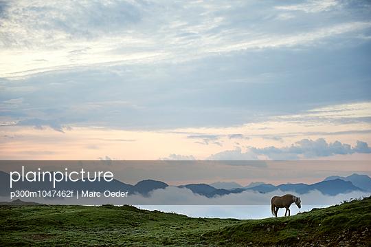 Austria, Kranzhorn, Horse on mountain pasture - p300m1047462f by Marc Oeder