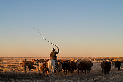 Cracking the Whip. - p343m1217839 by Matthew DeLorme