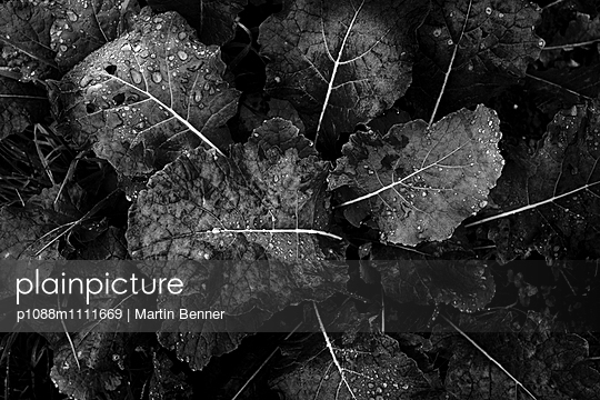 Useful plant - p1088m1111669 by Martin Benner
