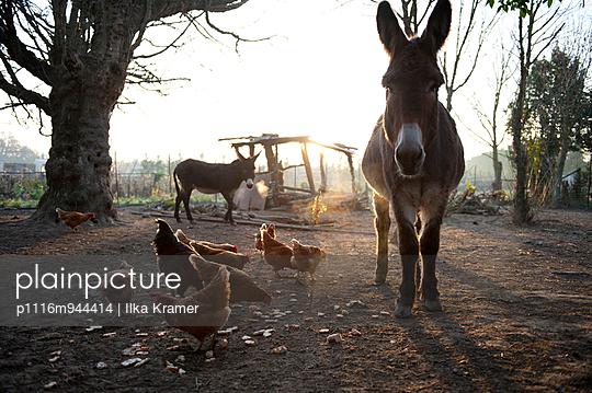 Auf dem Land - p1116m944414 von Ilka Kramer
