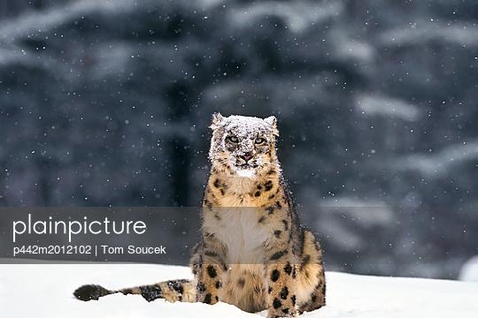 p442m2012102 von Tom Soucek
