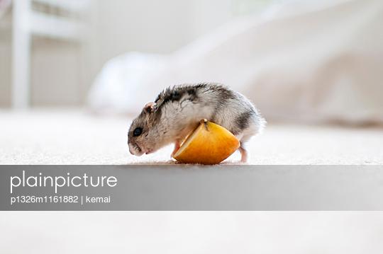 Apfelstürmer - p1326m1161882 von kemai