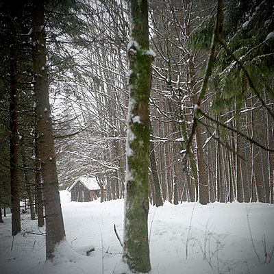 Winter, Allgäu - p1186m972782 by Christine Henke