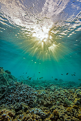 An underwater view of fish and coral with sunlight shining through the surface of the water; Hawaii, United States of America - p442m1179872 by Scott Mead