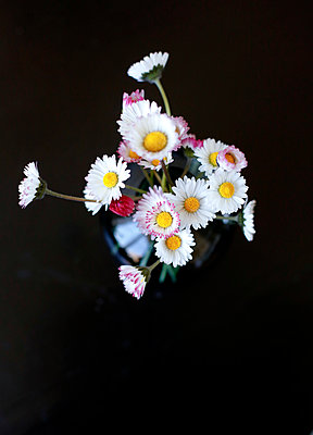 Flowers In Vase Viewed From Above On A Black Background.   - p847m888165 by Bildhuset