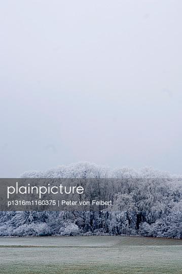 Wiese und verschneiter Wald, Leoni, Starnberger See, Bayern, Deutschland - p1316m1160375 von Peter von Felbert