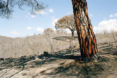Waldbrandwüste - p2684251 von Stephan Sasek