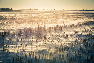 Stubble field in winter - p829m949337 by Régis Domergue
