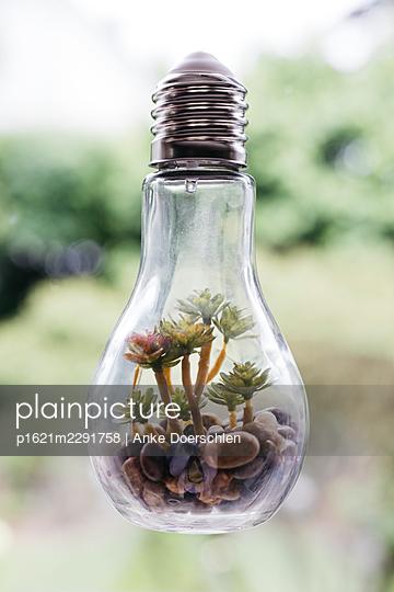 Light bulb as a flower vase - p1621m2291758 by Anke Doerschlen