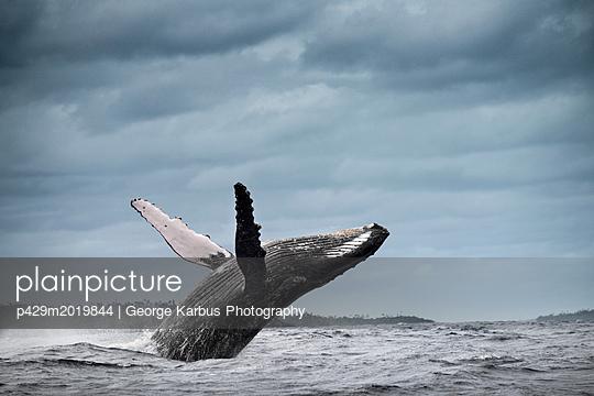 p429m2019844 von George Karbus Photography