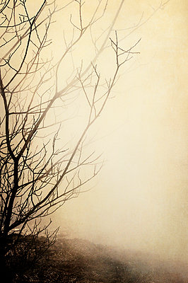 Shrub branches in mist - p1047m1044423 by Sally Mundy
