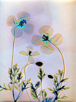 Gepresste Blumen - p945m2279001 von aurelia frey