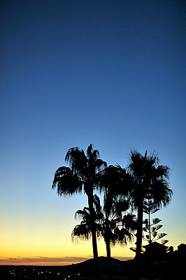 Silhouetted house under palm trees; Te - p1047m789490 by Sally Mundy