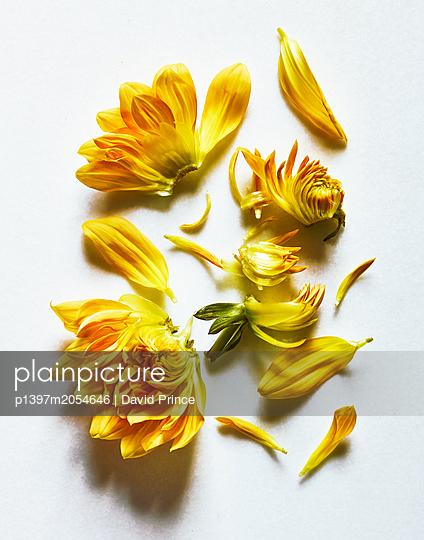 Gelbe Blumen - p1397m2054646 von David Prince