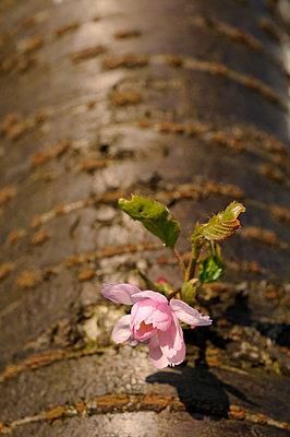 Blossom - p067m792843 by Thomas Grimm
