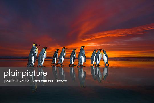 p840m2075908 von Wim van den Heever