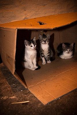 Katzen im Karton - p703m833423 von Anna Stumpf