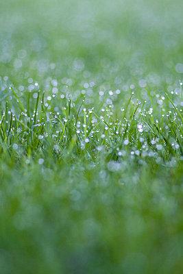 Dewdrops - p7390533 by Baertels
