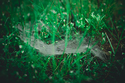 Cobweb in the grass - p1267m1201125 by Wolf Meier