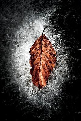 Blatt im Eis - p220m1208468 von Kai Jabs
