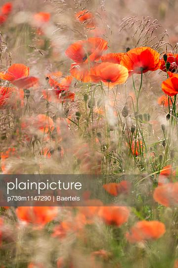 Wilde Blumenwiese - p739m1147290 von Baertels