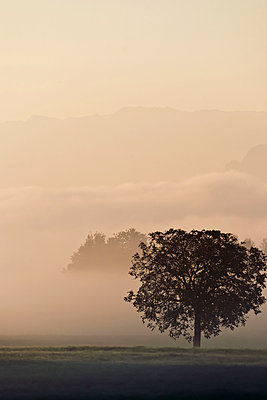 Morning mist in Bavaria - p533m2065579 by Böhm Monika