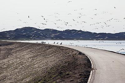 Vogelschwarm - p606m957502 von Iris Friedrich