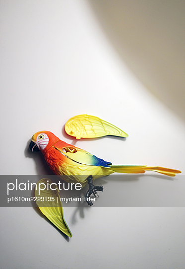 A parrot that has lost its wings - p1610m2229195 by myriam tirler
