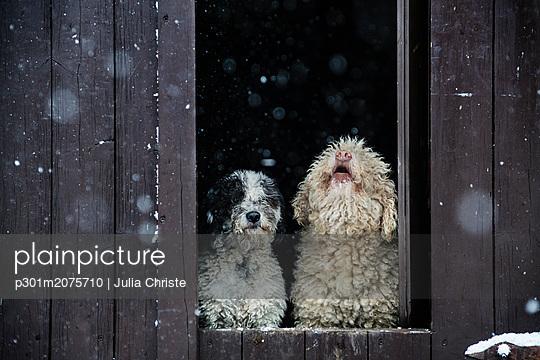p301m2075710 von Julia Christe
