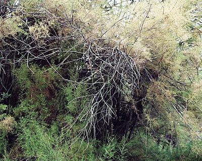 Baumkrone im Herbst - p1409m1466050 von margaret dearing