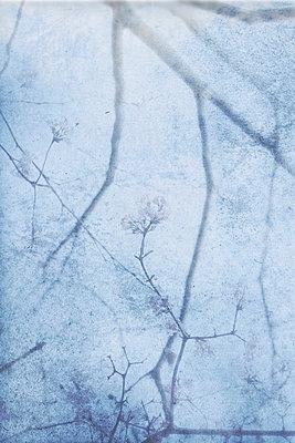Zweige - p4500570 von Hanka Steidle