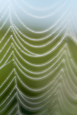 Cobweb with dewdrops - p739m1487206 by Baertels